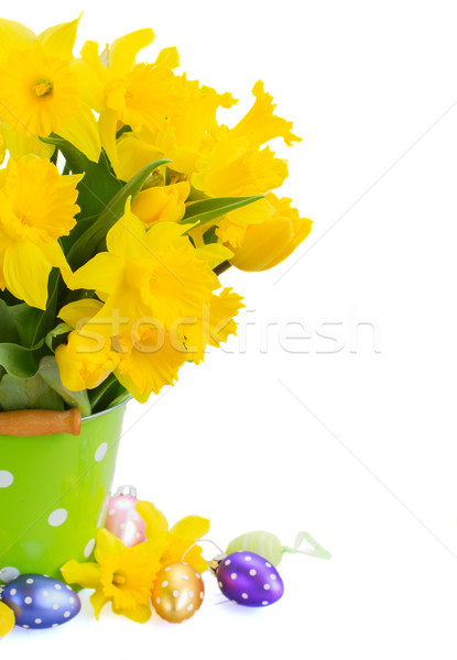 yellow spring narcissus Stock photo © neirfy