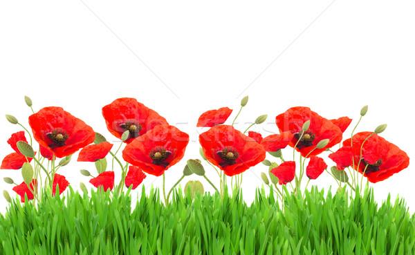 Poppy flowers and grass Stock photo © neirfy
