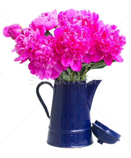 Bright pink peony flowers Stock photo © neirfy