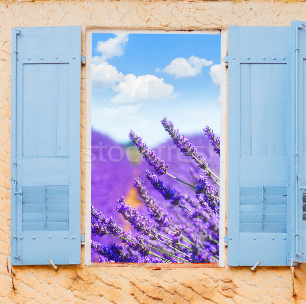 Lavender field window Stock photo © neirfy