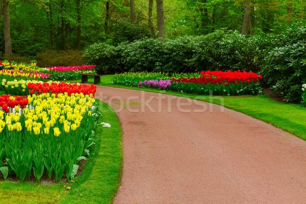 Kamień ścieżka ogród drogowego wiosenny kwiat Zdjęcia stock © neirfy