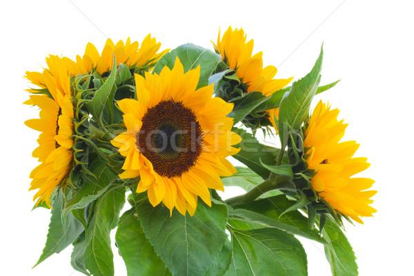 fresh sunflowers posy close up Stock photo © neirfy