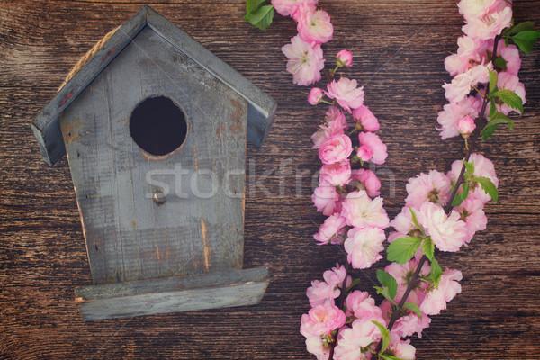 Cerise fleurs fraîches rose bois Photo stock © neirfy