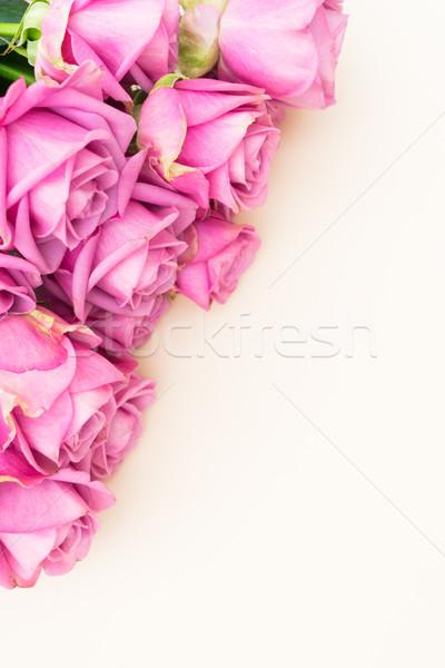 Valentin nap ibolya rózsák friss felső kilátás Stock fotó © neirfy