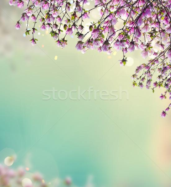 магнолия розовый цветы саду весны деревья Сток-фото © neirfy