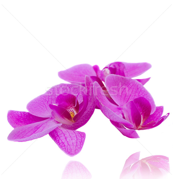 flowers of orchid Stock photo © neirfy