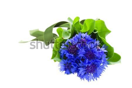blue corn flowers bouquet Stock photo © neirfy