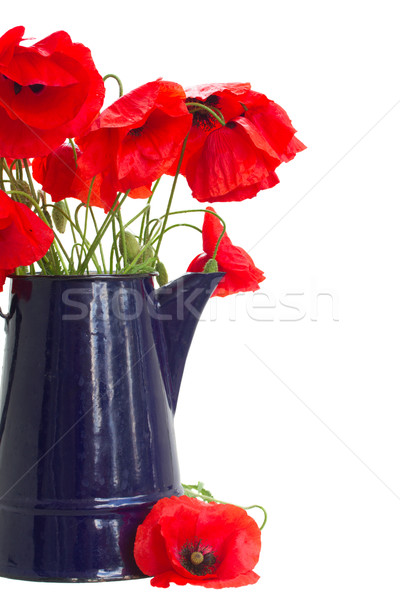 posy of poppy flowers Stock photo © neirfy