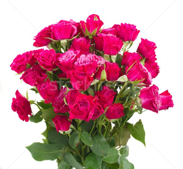 свежие розовато-лиловый роз букет изолированный Сток-фото © neirfy