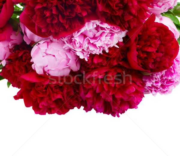 border of red and pink peonies Stock photo © neirfy