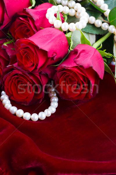 Kırmızı gül kadife taze çiçekler ipek Stok fotoğraf © neirfy