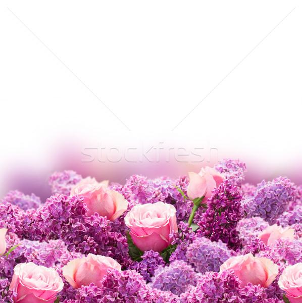 Lila aumentó flores frontera púrpura rosa Foto stock © neirfy
