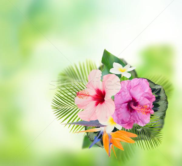 Turuncu ebegümeci çiçek tropikal çiçekler yaprakları Stok fotoğraf © neirfy