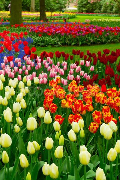 Flores da primavera holandês parque colorido árvores grama verde Foto stock © neirfy