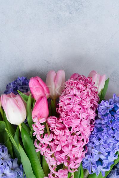 Foto stock: Jacinto · fresco · flores · luz · cinza · páscoa