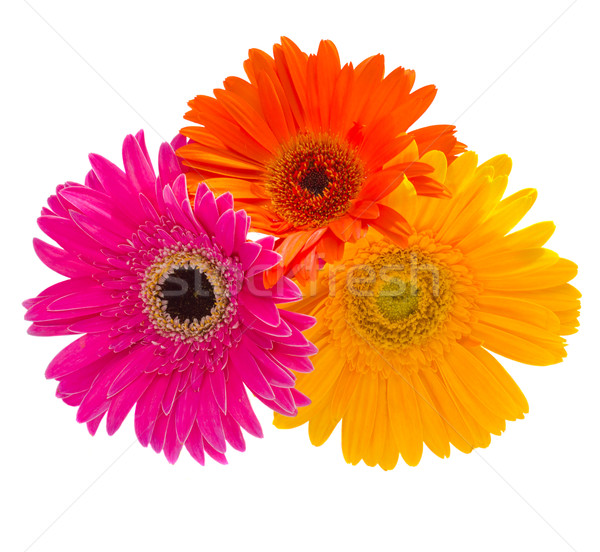 bouquet of gerbera flowers Stock photo © neirfy