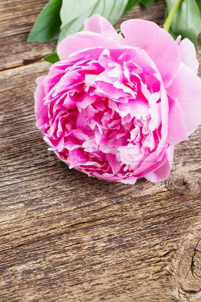 pink peony Stock photo © neirfy