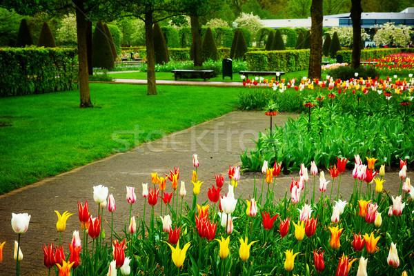 Holland colorato primavera prato fiori Foto d'archivio © neirfy