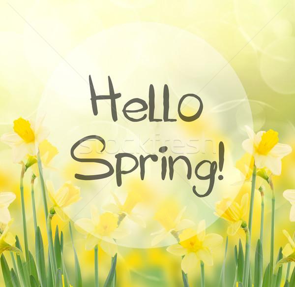 Tavasz növekvő nárciszok kert hello üdvözlet Stock fotó © neirfy