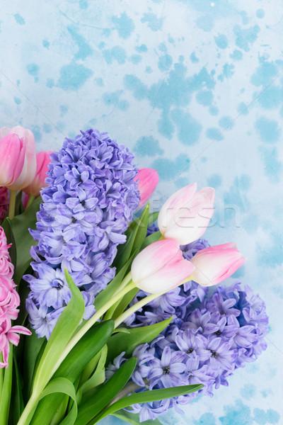 Foto stock: Jacinto · fresco · flores · tulipas · azul · rosa