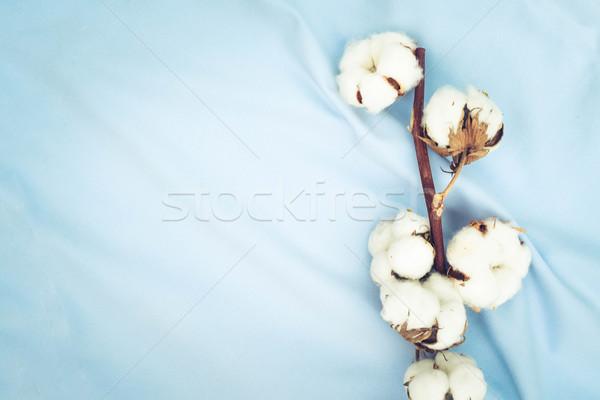 Raw cotton buds on cotton texture Stock photo © neirfy