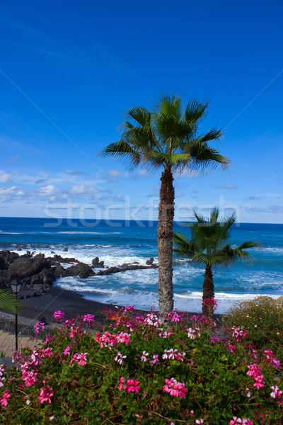 Tenerife Spanje la berg zomer oceaan Stockfoto © neirfy