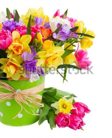 Abrótea flores verde pote isolado Foto stock © neirfy