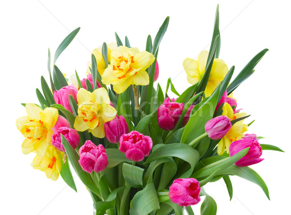 Monte tulipas narcisos vaso buquê rosa Foto stock © neirfy
