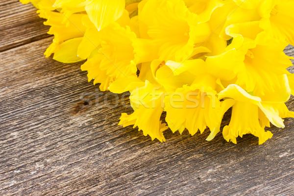 Narcissen houten bos vers Geel Stockfoto © neirfy