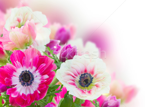 bunch of anemone flowers  Stock photo © neirfy
