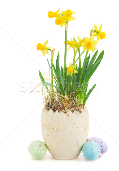 Húsvéti tojások vadászat fehér nyúl nárciszok edény Stock fotó © neirfy