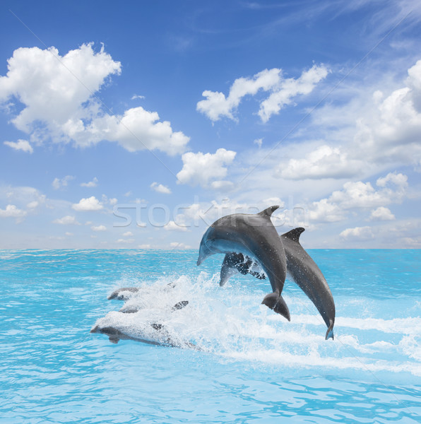 pack of jumping dolphins Stock photo © neirfy