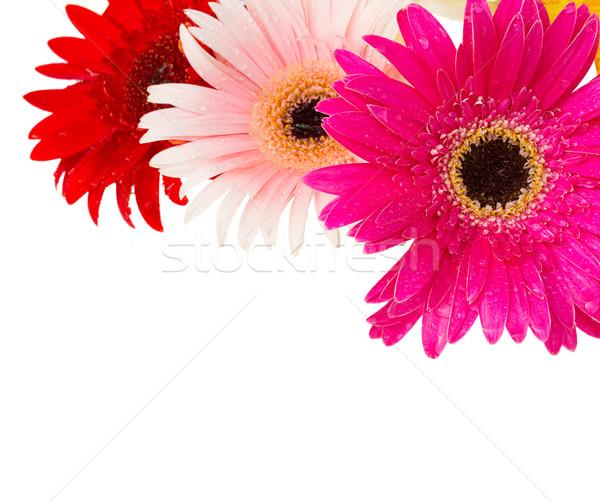 Stockfoto: Grens · bloemen · roze · geïsoleerd · witte · natuur