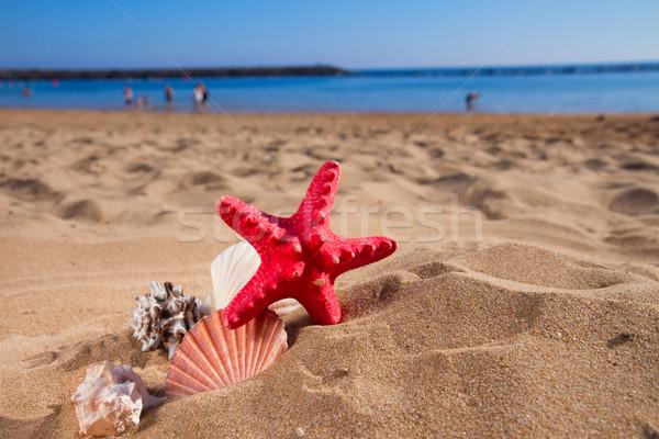 Stock photo: starfish ans seashells on sea shore