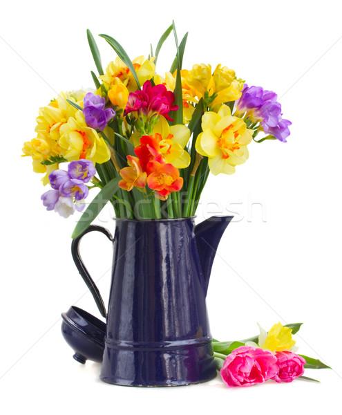 Nárcisz virágok kék citromsárga edény izolált Stock fotó © neirfy