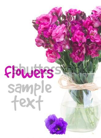 Leylak rengi çiçekler pembe vazo yalıtılmış Stok fotoğraf © neirfy