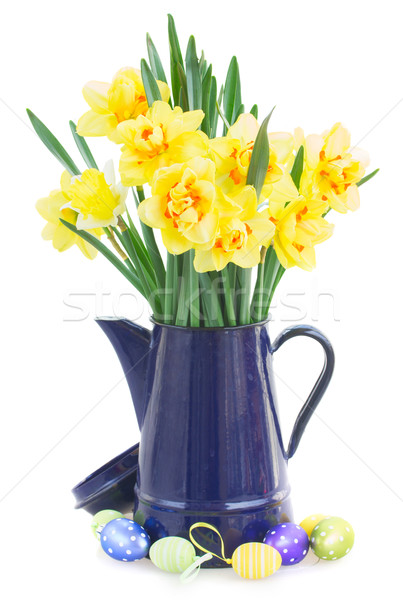 spring narcissus Stock photo © neirfy