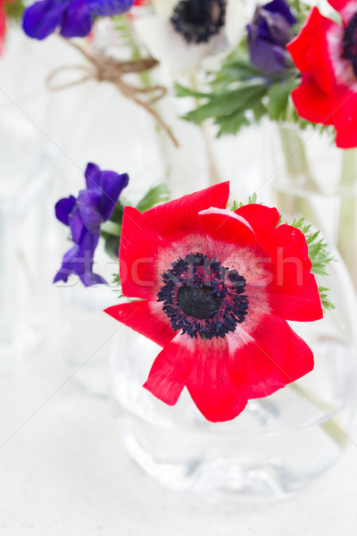 blue  anemone flowers  Stock photo © neirfy