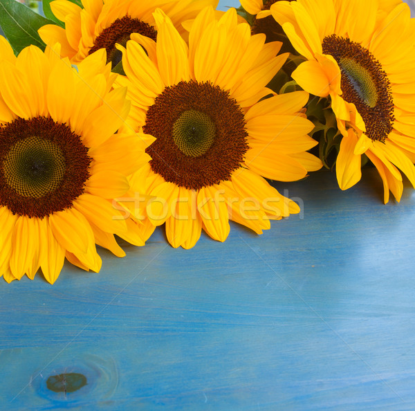 bight sunflowers Stock photo © neirfy