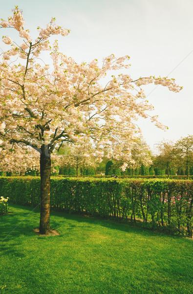 Stock photo: Keukenhof garden, Netherlands