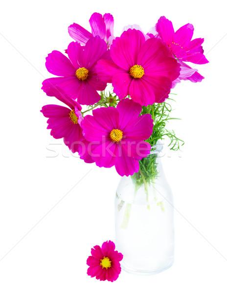 ピンク 花 花瓶 孤立した 白 花 ストックフォト © neirfy