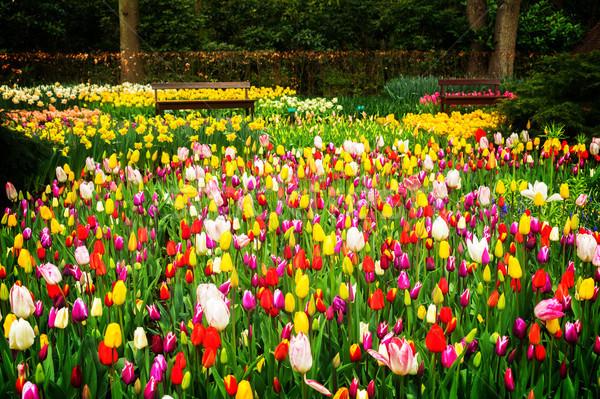 Tavaszi virágok virágágy vegyes citromsárga piros rózsaszín Stock fotó © neirfy