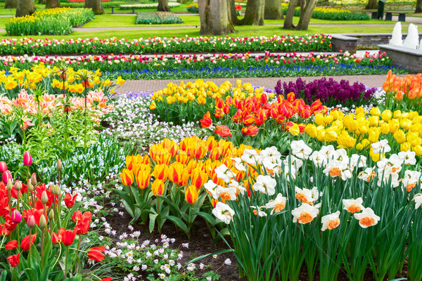 Hivatalos tavasz kert tarka növekvő virág Stock fotó © neirfy