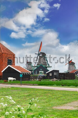 Holandês vento tradicional rural cenário primavera Foto stock © neirfy