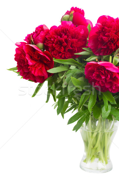 red  peonies Stock photo © neirfy
