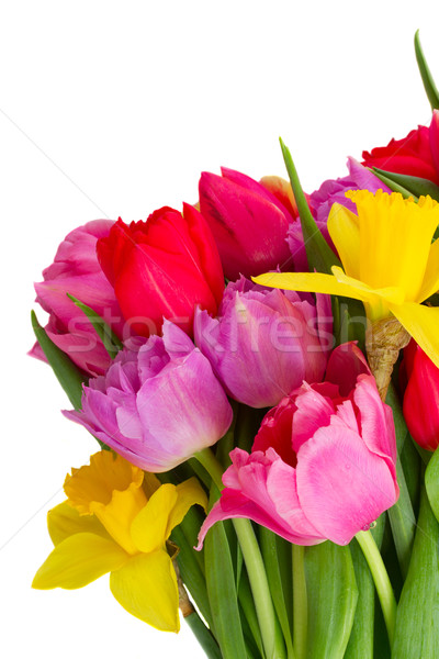 Buquê tulipas narcisos monte fresco rosa Foto stock © neirfy