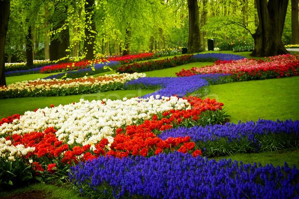 Flores de primavera Holanda jardín colorido Países Bajos retro Foto stock © neirfy