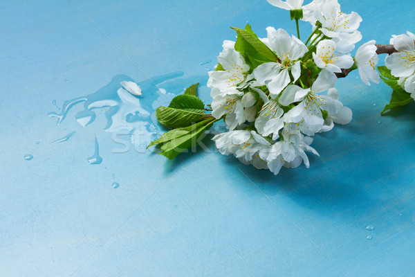 fresh spring flowers on blue Stock photo © neirfy