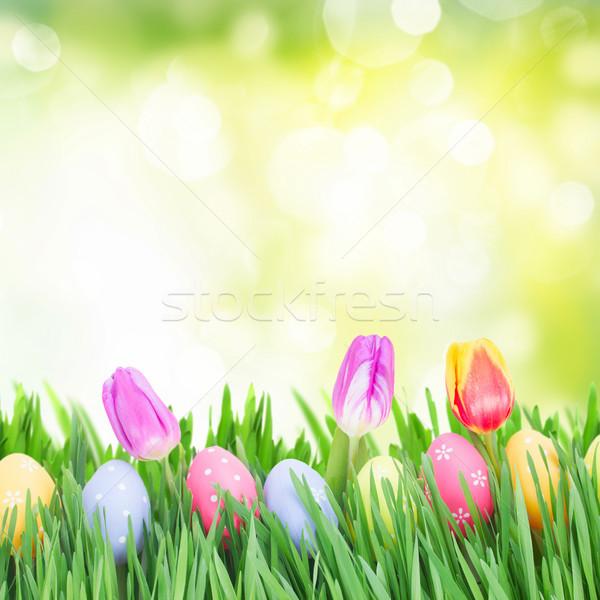 Stockfoto: Paaseieren · gras · tulpen · tuin · Pasen · bloem