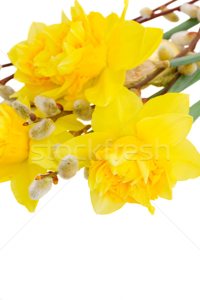 bouquet of daffodils with catkins close up Stock photo © neirfy